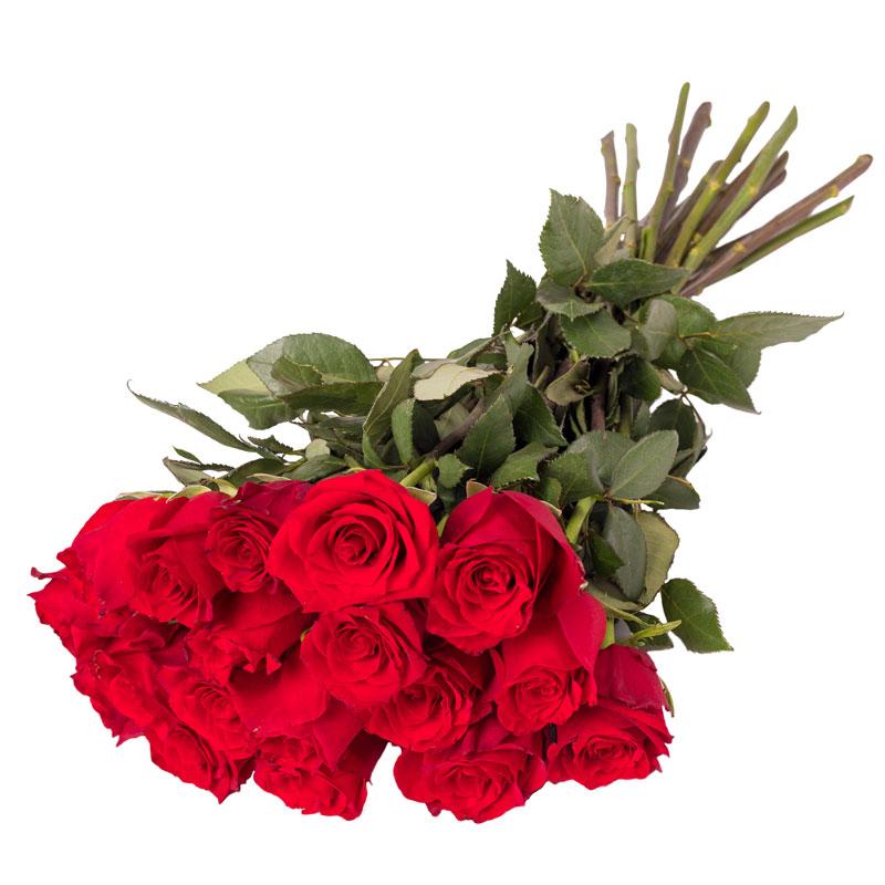 Róże dla Zakochanych Laflora
